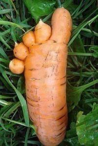 Au secoure un pied de zombie-carotte